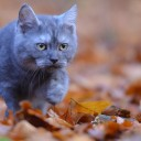 young-cat-665133_1280